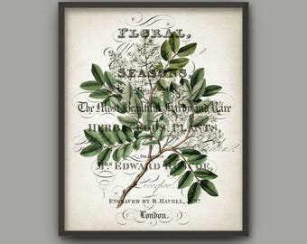 Green Leaves Art Print, Botanical Print, Vintage Wall Art, Green Leaf, Woodland Plant, Botanical Home Decor, Tree Branch Book Plate B783