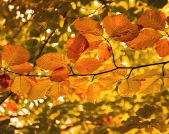 Fine Art print art photography autumn leafs