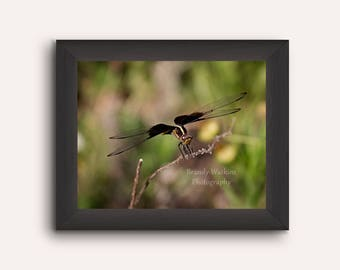 Dragonfly photography print, nature photography, wildlife photography, nature photography,insect picture, wall decor, dragonfly pic