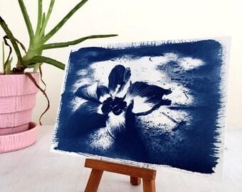 Original Art on Watercolor Paper - Cyanotype Beach Flower Picture - Hibiscus Artwork