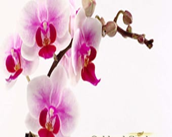 NANTUCKET BRIAR - Fragrance Oil - Fresh orchid blended with bergamot, patchouli and musk