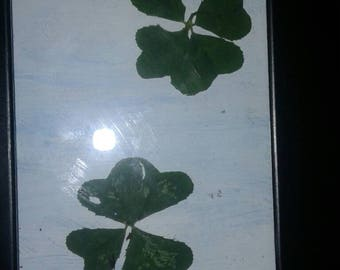 Framed 4 leaf clovers
