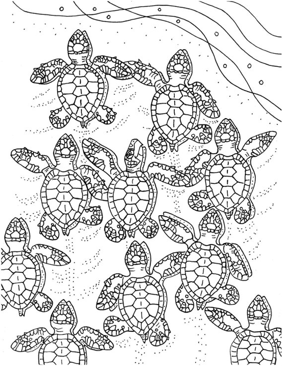 baby sea animal coloring pages - photo#36