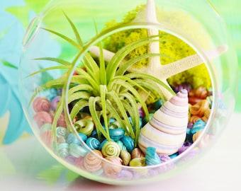 Beach Terrarium Kit ~ Small Air Plant Terrarium Kit ~ Coastal Living Beach Decor ~ Rainbow Shells or Sand Choice ~ Starfish - Gift idea