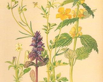 Vintage Edwardian Flowers Herbs 68 Botanical Print plant print botanical print bookplate art print 1970 plants wall art