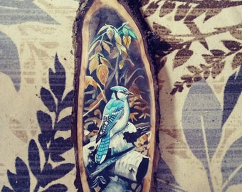 Blue Jay Daize