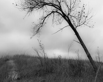 Tree Photograph, Black & White, Sand Dunes, Fine Art Photography, Sleeping Bear Sand Dunes, Photo, Art