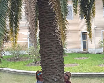 Largest Palm Tree I have ever seen and it wasn't even on the beach