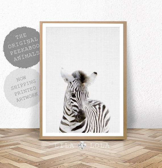Nursery Wall Art, Baby Zebra Animal Print, Baby Room Decor, Wall Art, Large Safari Poster, African Animal, Kids Room Print