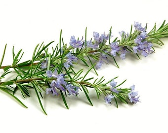 "H) ROSEMARY""~Seeds!!~~Add Mediteranean Flavors!"