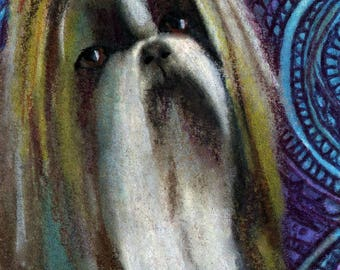 original art  aceo drawing shih tzu dog