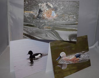 Pack of 3 duck greeting cards