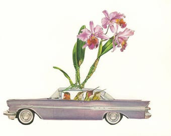 Orchid thieves. Limited edition print by Vivienne Strauss.