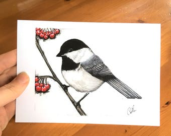 Ten identical greeting cards, Drawing, Bird, Winter, Christmas, Chickadee, Waxwing, Woodpecker, Jay, Cardinal, Holidays, 5 x 7 inches