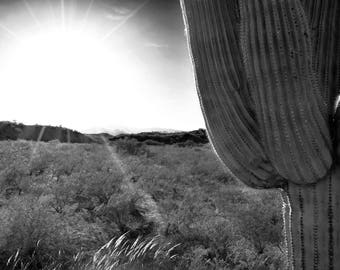 Black and White Saguaro Cactus Photography Art Print and Notecard