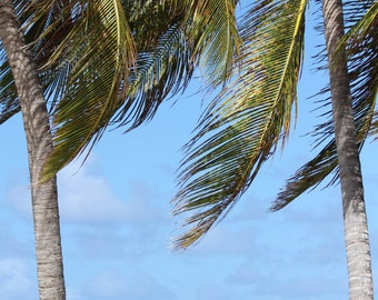 Tropical Breeze print