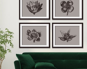 Botanical Flower Bud (Series B - Horizontal) Set of 4 Art Poster Prints (Featured in Pale Gravel and Black)