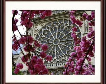 Notre Dame Rose Window - Fine Art Print