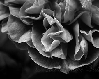 Nature Photography, Floral Print, Wall Decor, Flower Photograph, Photo of a Rose, Summer Picture, Petals, Bloom, Black and White, Grey