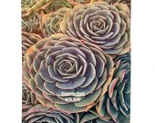 Succulent Wall Tapestry. ...
