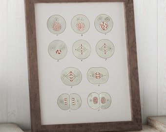 Cell Division Biology Textbook 1916 Art Print - Cell Mitosis Science Art Print - Biology Student Gift Idea - Dorm Room Art