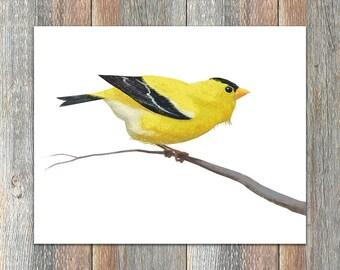 American Goldfinch Bird Print