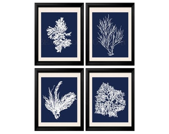 Coral Print Nautical Decor, White Blue Sea Coral Print Set of FOUR 8x10, Coral Wall Art, Coral Print, Sealife print Blue 8x10 Prints