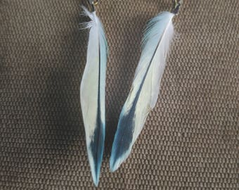 Parakeets feathers earrings / Earrings with feather of parakeets