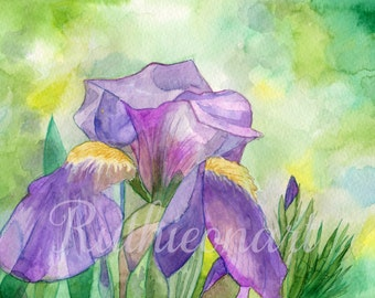 Purple Iris Watercolor Print