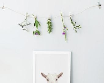 Goat Print - Nursery animal prints - Nursery decor - Gender neutral decor - Nursery wall art - Printable nursery - Babys room decor