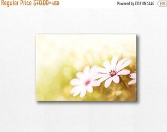 ON SALE flower photography canvas print 12x12 24x36 fine art photography nature daisy canvas art botanical canvas floral wall decor canvas l