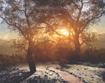 Surreal Landscape Photo, Tree Sunlight Collage, Landscape Montage, Sunset Path art, Surreal Photo Collage, Sublime Sunset, Dreamy Sunlight