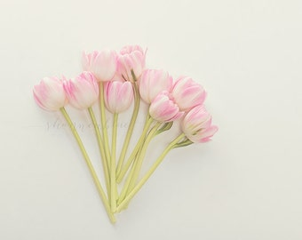 tulip still life photography / pink, flower, bouquet, soft pink, lime green, spring/ tulip study no. 1 / 8x10 fine art photograph
