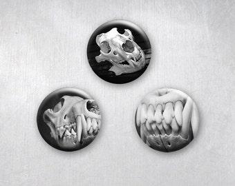 Animal Skull and Teeth Horror Photographs, Pinback Buttons, Original Art Design, 1.25 inch, Set of 3