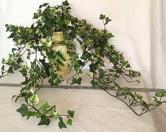 Ivy Vines in Ceramic Vase