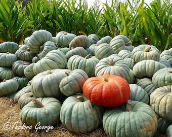 Orange and Green Pumpkin Photography, Food Photography, Kitchen Photography, Fall Photography, Autumn