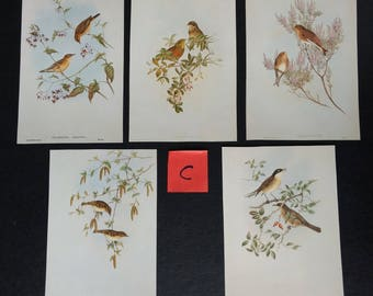 5 Vintage Bird Pictures by John Gould Paper Pack Ephemera for Junk Journals, Scrapbooks, Die Cutting, Collage, Decoupage, Paper Crafts