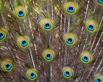 Eventail de plumes