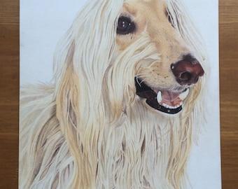 Afghan Hound Illustration, Dog Drawing, Colored Pencils Illustration Print.