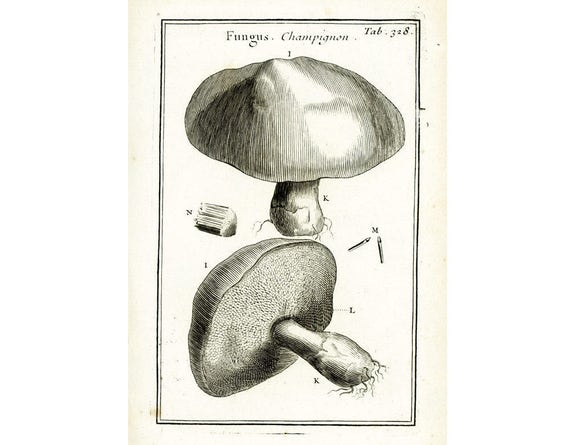 1797 Anatomie Pilz Bolete Pilz. Hut-Lamelle Tournefort
