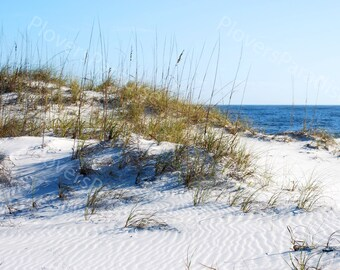 Florida Beach Sandunes // Beach Photography // White Sand Beach Print