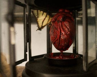 Anatomical Gothic Heart Butterfly Taxidermy