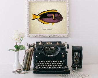 Botanical Print, Tropical Fish Print, Flagtail Surgeonfish Print, Vintage Natural History Art, Nautical Art, Surgeonfish Illustration SL014