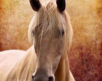 Horse Portrait, Equine Art, Fine Art, Horse Photos, Pictures of Horses, Horse Photography, The Portrait