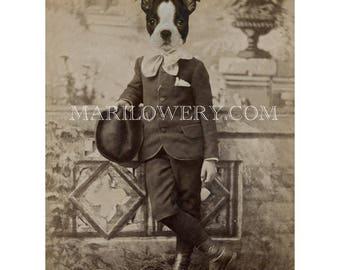 Boston Terrier Art Print, Dog in Suit, 8.5 x 11 Inch Print, Victorian Animal Portrait, Anthropomorphic Dog Art, Gift for Men