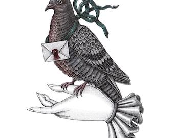 Carrier Pigeon A4 Print