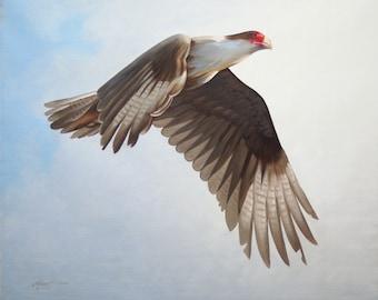 Caracara bird 20x24 wildlife oil painting by RUSTY RUST / C-79