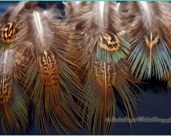 Feather Embellishments Pheasant Feathers Craft Feathers Brown with hint of Green Gray Natural Bird Feathers 12 PCS