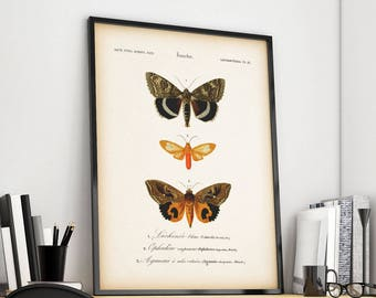 Vintage Butterfly print, Antique entomology print, Instant download printable art, Entomology art, Insect print, Butterfly wall art