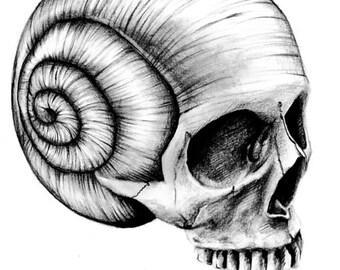 Death By Snail